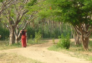 Tamil Village India Pichamani 16